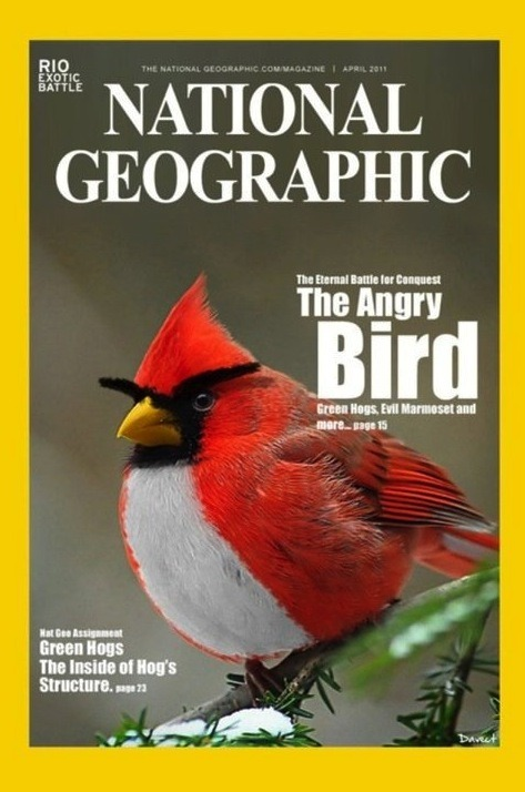 laughingsquid:  The Angry Bird