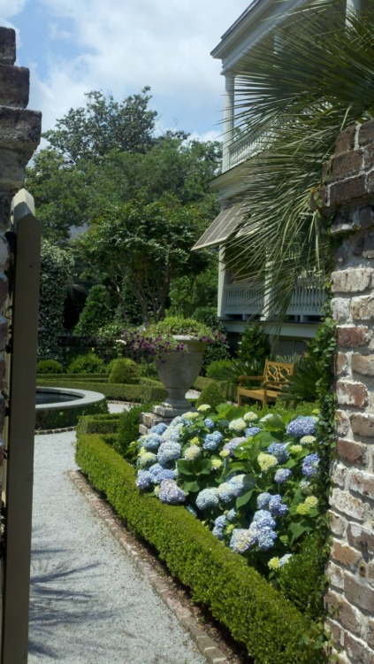 Gorgeous garden on Meeting St. Charleston, SC
