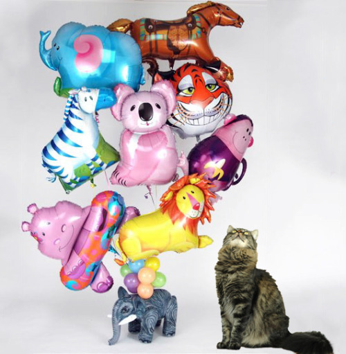 minoulookingatthings:  Looking at balloon animals.