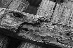 wood on Flickr.sharpen wooden