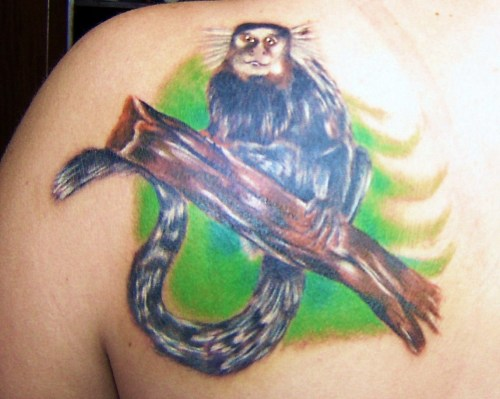 My marmoset tattoo I just got yesterday, here in Belo Horizonte, Brazil. I've been here on exchange for 8 months, and this is to remind me of everything I've gone through and learned here. Also, I had never seen anything so cute, and I love how everyone flocks over to them just to get them to take a little piece of bread from their hands =)
