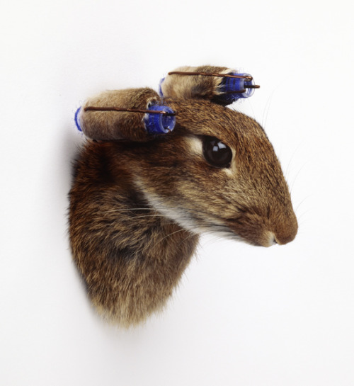 Nancy Fouts, Rabbit with Curlers, 2010 Taxidermy rabbit, curlers, kirby grips SIZE: h: 10 x w: 15 cm / h: 3.9 x w: 5.9 in exhibition 'Un-think' at The Pertwee, Anderson and Gold Gallery
