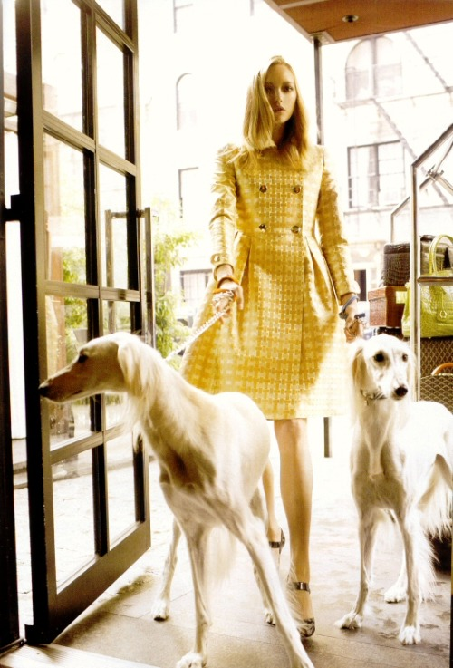 Gemma Ward and animal protectors