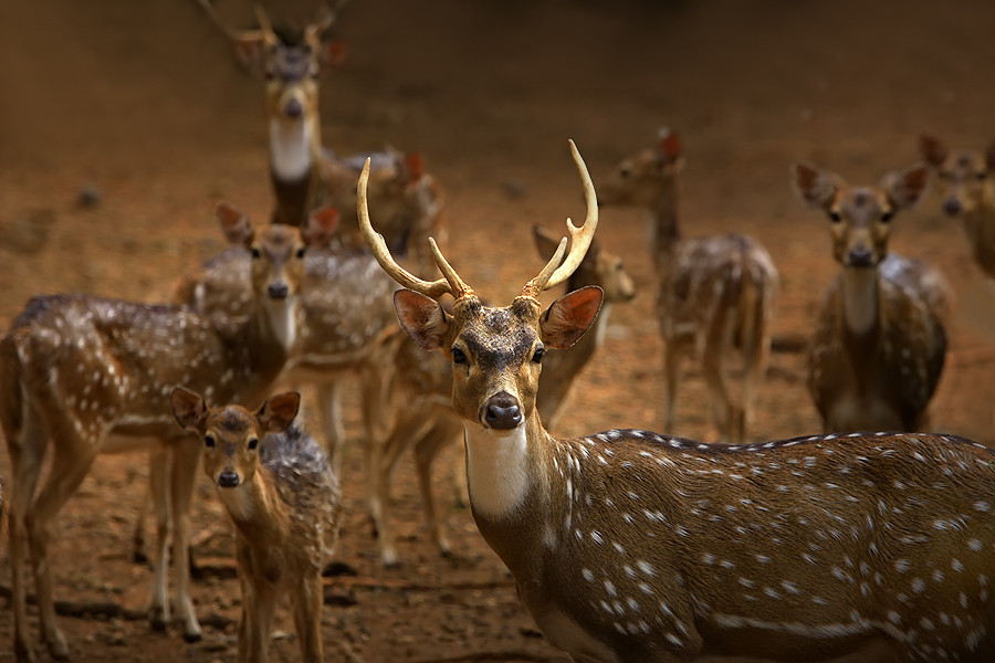 magicalnaturetour:  Deer by Jeffry Surianto :)
