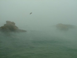 elisrah:  a seagull lost in the mist@Biarritz by dadou~ on Flickr.