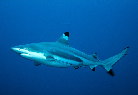 allcreatures:  animalworld: Sign the Petition to Give Sharks a Chance ©Lonely Planet Shark populations are devastated by overexploitation,  including targeted fishing, bycatch and finning. Join thousands of AWARE  divers and shark advocates who are serious about shark protection.  Support the goal to reach 100,000 petition signatures from around the  world by June 8, World Ocean Day. Sign the petition and urge your friends and colleagues to do the same.  Together, we're gaining the attention of policymakers  worldwide. We're closing loopholes in existing global shark management  policies and insisting on full protections for Endangered and Critically  Endangered sharks.  Sign their petition here. Photo: http://www.lonelyplanet.com/travelblogs/196/53281/Close+Encounters+of+the+Jaws%C2%A0Kind?destId=357724  Takes just a few seconds.