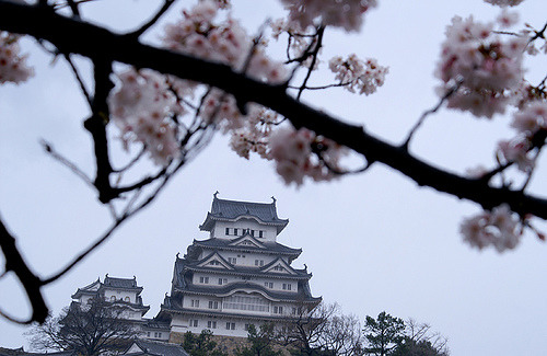 traveling-the-world:  Himeji Castle, Himeji, Japan By Tōsuto desu!   I miss the cherry blossoms. Such subtle beauty!