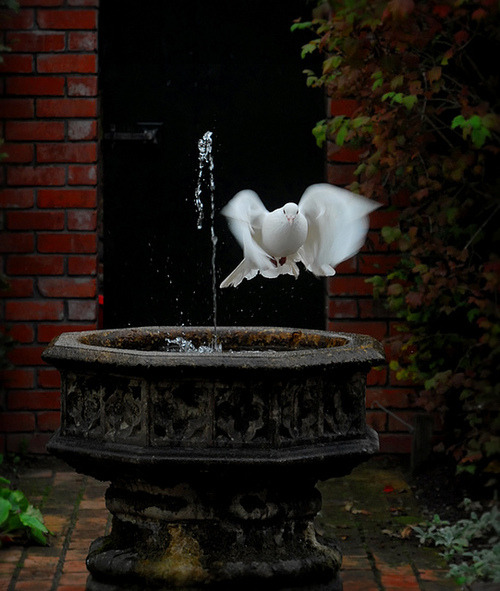 "The white dove was a symbol of peace of and for the Greek goddess Aphrodite long before Judeo-Christianity ""claimed"" it as a symbol of peace and their holy spirit. -LSM"
