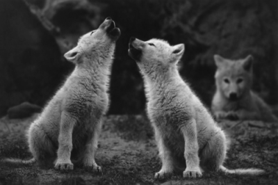 Little howlers.