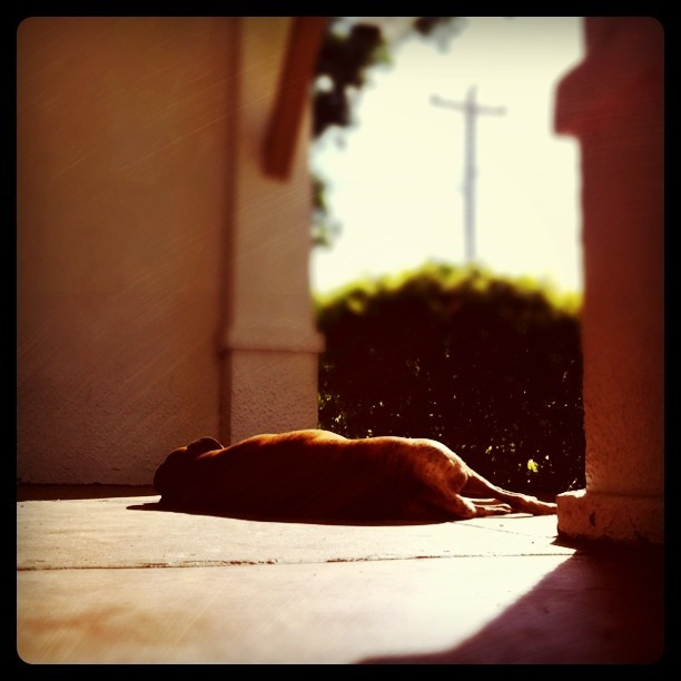 Playing Dead-Sun Bathing (Taken with instagram)