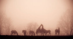 Foggy Horses || Showcase of Inspiring Foggy Photography ||