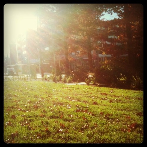 Sun! (Taken with Instagram at Arts Precinct, Canberra)
