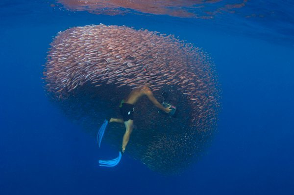 Chris Tan encircled by a school of bait fish whilst filming in Indonesia. Photograph by Jason Isley.