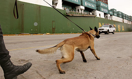 A shepherd or a Malinois runs twice as fast as a human.  More about the dog that accompanied the SEALs on their bin Laden mission. And a great excuse for a dog article.