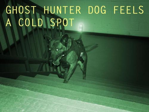 GHOST HUNTER DOG FEELS A COLD SPOT (War Dog,  Foreign Policy Magazine)
