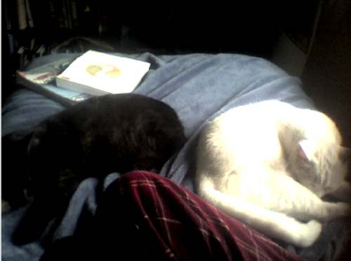 MY CATS ARE SLEEPING SIDE BY SIDE you have no idea how that's a milestone My black male cat is Nikki My white female cat is Blanche YIN AND YANG ;3;