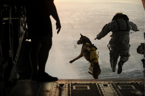 photojojo:  War Dog - a Gallery of Military Dogs The dog above is jumping out of a helicopter and into water while wearing a life vest! Talk about badass. The record for highest jump is 30,100 feet! Side note: The Special Ops team that got into Osama bin Laden's compound did so by being lowered in from a helicopter, and their team also included a dog. via The Atlantic  I love this. So so gangzta these puppydoggs
