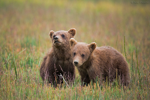 purpleraven:brothers… (by Mac Danzig Photography)