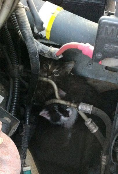 A purring engine