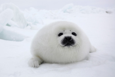 "cheatsheet:  ""Yea…you ordered a marshmallow? Too bad. I'm a seal. Deal with it.""  tooo cuuuuttteee"