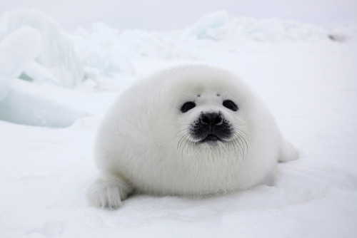 """Yea…you ordered a marshmallow? Too bad. I'm a seal. Deal with it."""