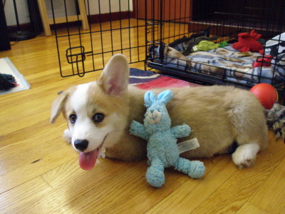 cuteness! animalswithstuffedanimals:  Easter: a pup and his bunny :) Submitted by shrn