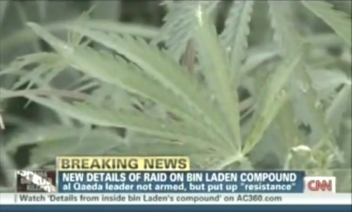 The real question: Was Osama bin Laden smoking marijuana? They were growing pot on his compound: A recent report by our boy Nic Robertson of CNN notes that the slain al-Qaeda leader may have had an interesting crop on his property. Next to the cabbage and potatoes were potent marijuana leaves, which is interesting for a number of reasons. Osama had longstanding kidney problems, which might partly explain it, but if he was smoking recreationally, that adds a new wrinkle to this story. LOOK AT US, SPECULATING! source Follow ShortFormBlog