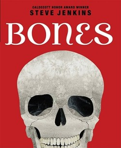Bones (2010) by Steve Jenkins.  Another excellent non-fiction book. There are all kinds of skeletons in this book and the comparisons between species is especially fascinating. For example, Jenkins shows the skeletons of a human arm, a spider monkey, a gray whale, a turtle, a fruit bat and a mole. They look really different but then he emphasizes that all of these animals share the same basic set of bones. You slow down and then actually see that they may be different sizes, but yes, they are basically the same. And that's when the idea of evolution starts to become a little more concrete.