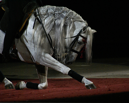 wow, what a horse classicalhorse:  bowing horse (by moocatmoocat) Thank you again to all the new followers.  We just hit 200!