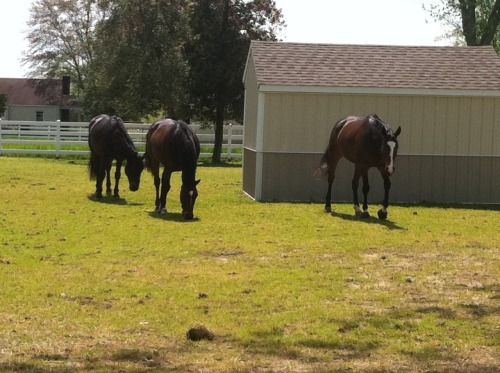 The boys hanging out with their besty… from left to right Titantico, Bravo, and Myrick.