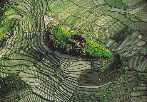 blinkanditsover:  Bali Rice Fields Postcards (by crayolamom)