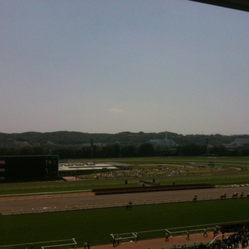 I'm in Tokyo Racecourse. It's so fine today. (Taken with Instagram at 東京競馬場)