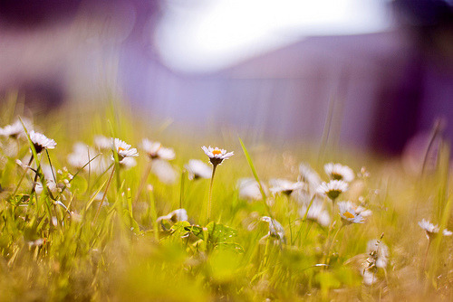 artpixie:  Life looks good today (by *December Sun)