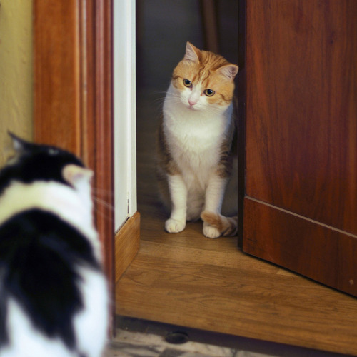 "cybergata:  ""Knock, knock.  Who's there?"" by pippy & timmy on Flickr."