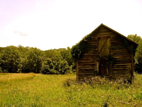 decaying-beauty:  country areas are always full of quaint little abandoned houses