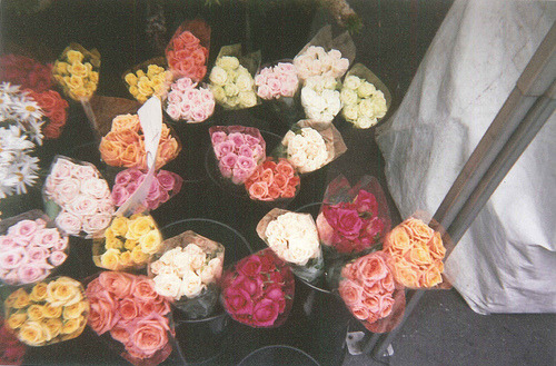 awww id love somebody to buy me roses. or flowers in general.