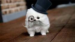 5tephanie5ays:  If I had I pet I would totally dress it up in snazzy little outfits like this.   I can't stop laughing. ♥♥♥