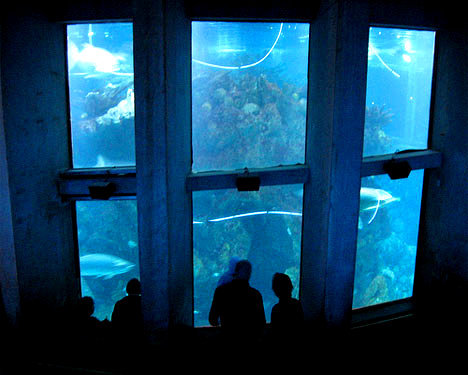 523. Go to the New England Aquarium in Boston