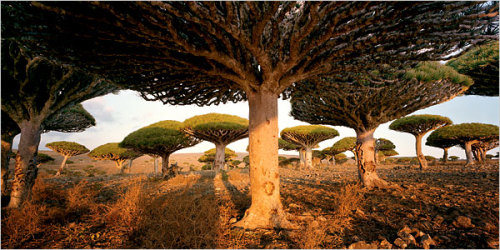 saibotk:  The Wonder Land of Socotra, Yemen