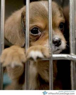 blog.al A puppy peers through its enclosure at the Tuscaloosa Metro Animal  Shelter  in Tuscaloosa, Ala. hoping to be reunited with it's owner. Many  animals were separated from their families during last week's  devastating tornado. A constant flow of people searching for their lost  animals visit the shelter each day. AP Photo/Dave Martin