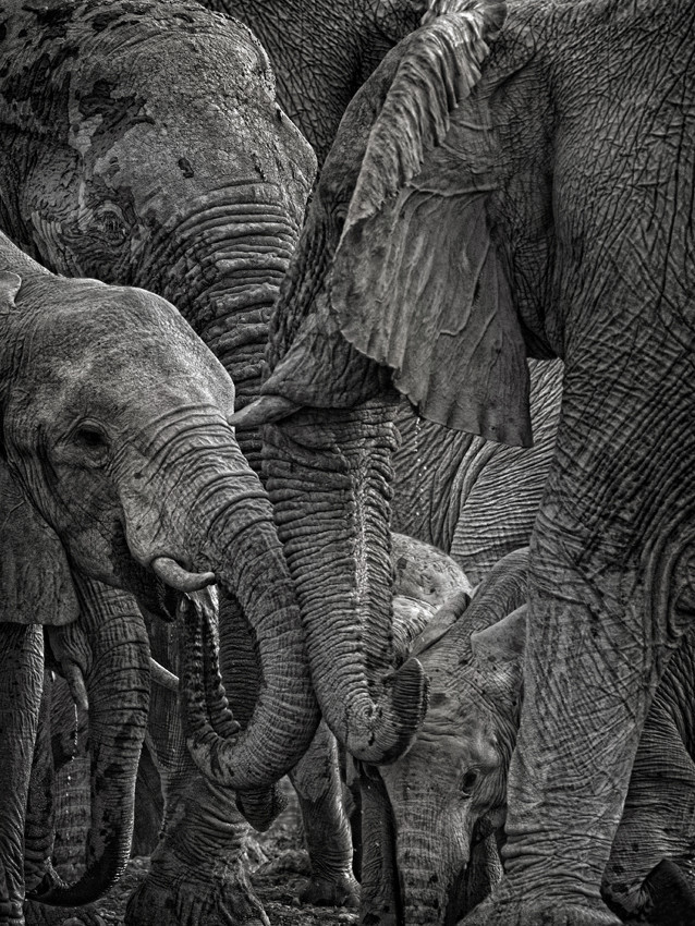 "(via 500px / Photo ""Elephants in melee"" by Mathilde Guillemot)"