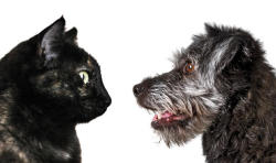 How to Outmaneuver Your Pet:Sometimes the most mundane tasks become a war of wills between you and your pet. Here's  how to win three infamous owner vs. pet battles.