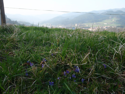 Wild flowers with Onati in the distance.