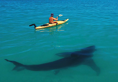 wish I was the guy in the kayak not because I have a death wish… I just really like being in the water with sharks.