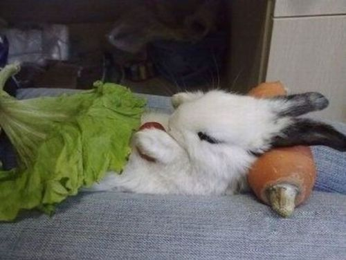 bunny salad! my clyde would love this!