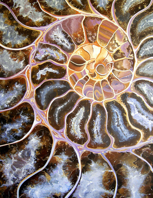 Closeup of a nautilus hemishell