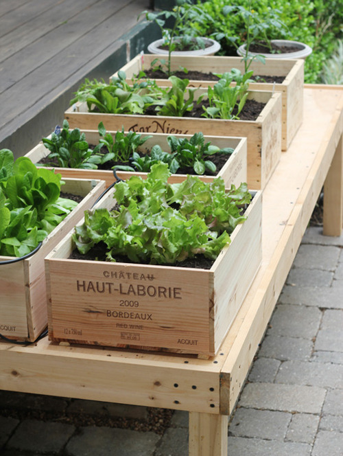 apalelandscape:  Style Files: DIY: Wine Box Vegetable Garden
