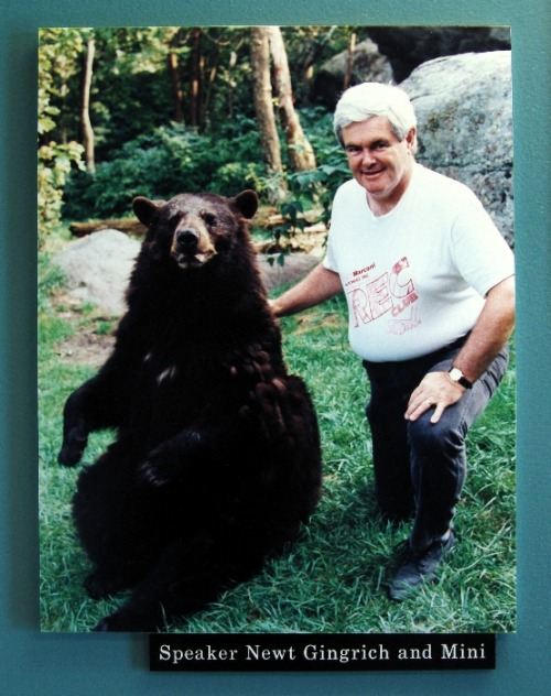 In addition to his many wives, Newt likes the bears.