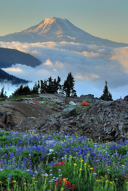 Wildflowers, tents, Mt. Adams by Robert Crum
