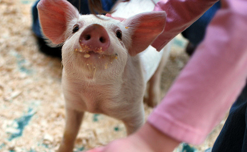 WANT WANT WANT WANT WANT IT NOOOOOOWWWWWWW magicalnaturetour:  Happy Piglet! (by meddygarnet) :)